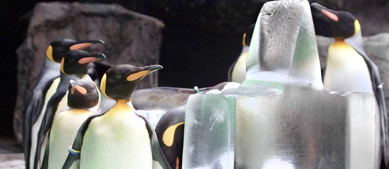 Cerca de 480 mil pinguins imperiais podem desaparecer até 2100 por conta das mudanças climáticas Foto: Kazuhiro Nogi / AFP