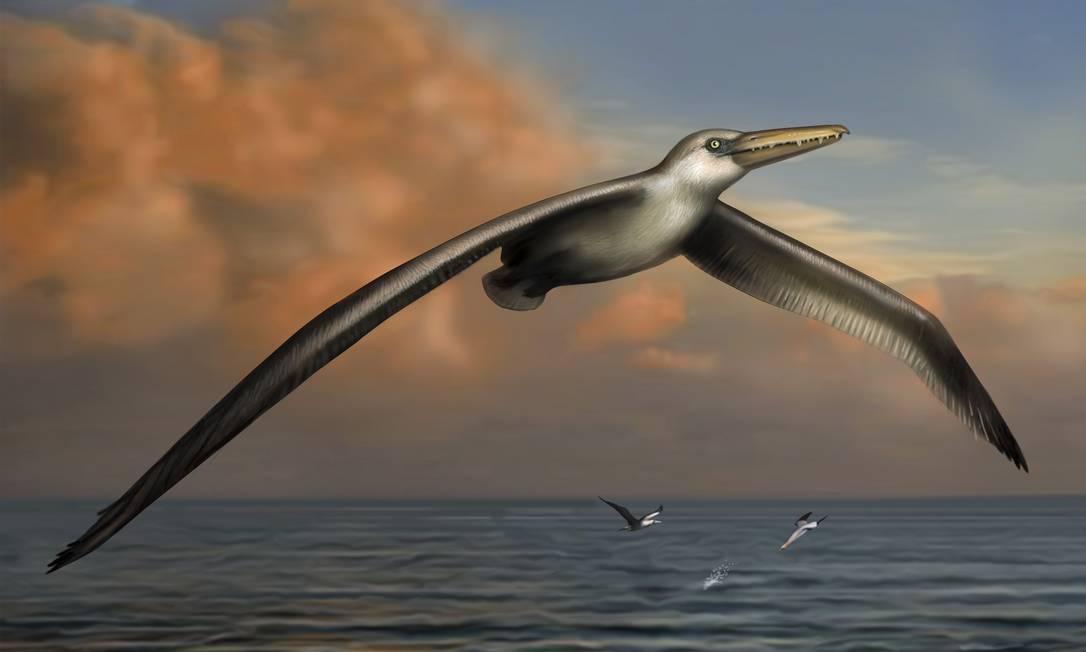 Ilustração mostra como seria a aparência do pássaro gigante Foto: / Liz Bradford/Bruce Museum