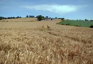 Plantação de trigo: aumentar a produtividade e usar de modo mais eficiente recursos e alimentos produzidos são o caminho Foto: INRA/Gérard Paillard