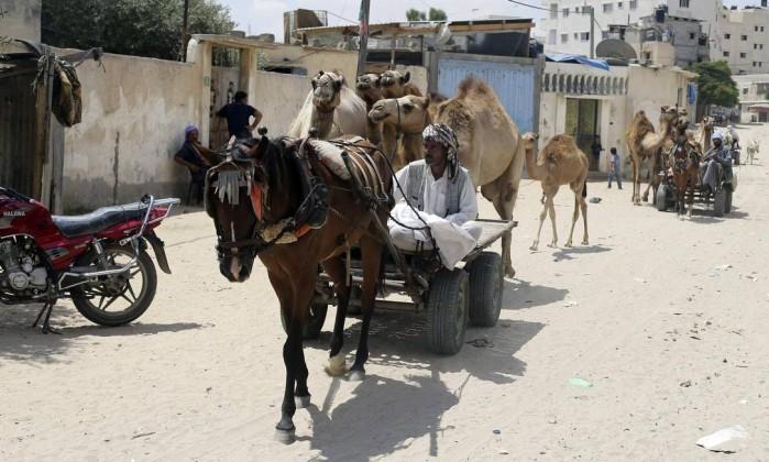 Animais nas ruas de Rafah: Exército israelense afirma que Hamas usou um burro em uma tentativa de atentado - IBRAHEEM ABU MUSTAFA / REUTERS
