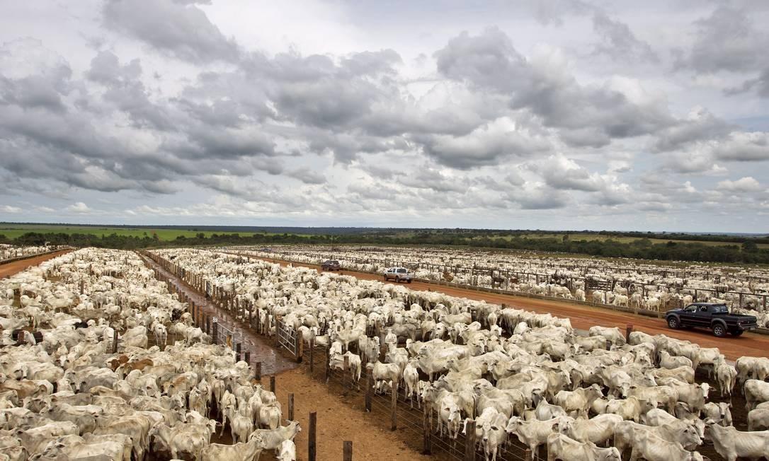 Criação de gado também exige 11 vezes mais água para irrigação de campos do que as outras Foto: Guito Moreto / Agência O Globo