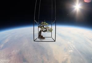 Bonzai é suspenso por um balão, em contraste com a Terra Foto: Azuma Makoto