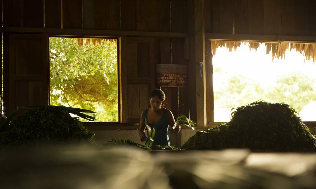 Trabalhadora da Cooperativa Carmelita, na região de Petén, no Norte Guatemala, seleciona folhas de uma palha nativa: mais de 30 milhões delas são exportadas anualmente para os EUA e Canadá Foto: / André Liohn/Uma Gota no Oceano