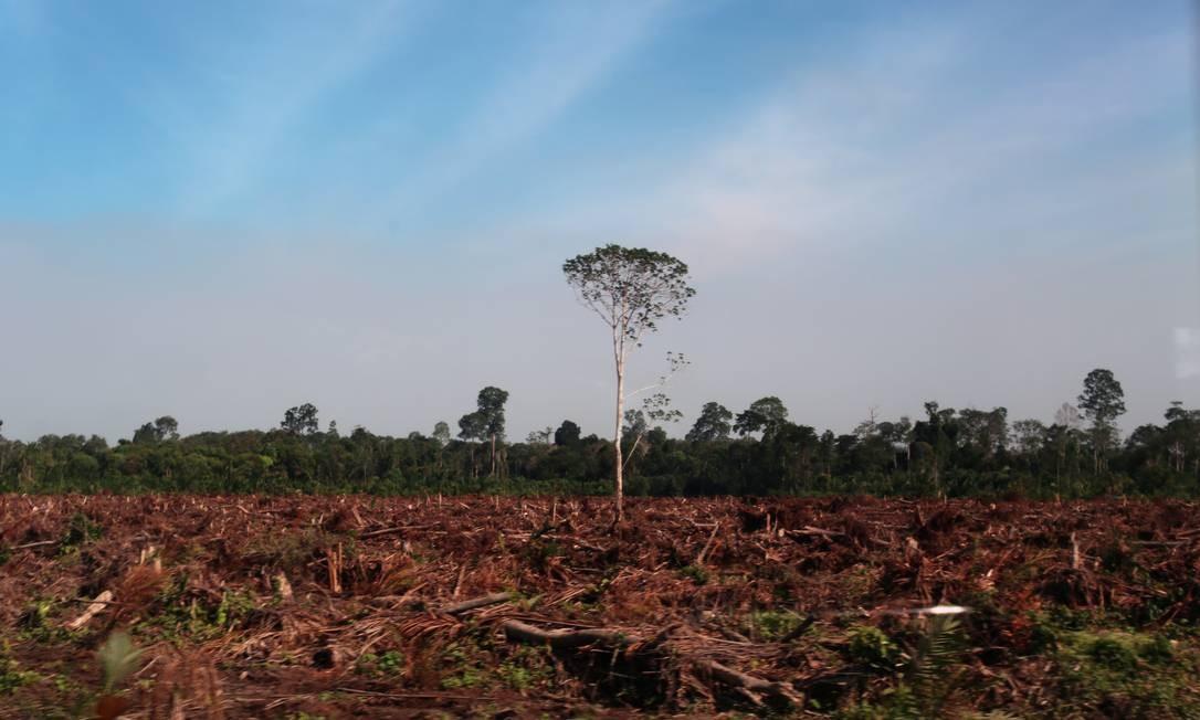 Devastação na Indonésia: governo detém 96% das florestas, mesmo sem autorização do Supremo Tribunal do país Foto: Rhett A. Butler/Mongabay.com