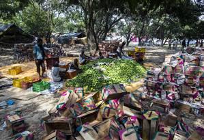 Trabalhadores indianos em Malihabad embalam mangas que serão vendidas nos mercados de Nova Delhi Foto: Prashanth Vishwanathan / Bloomberg