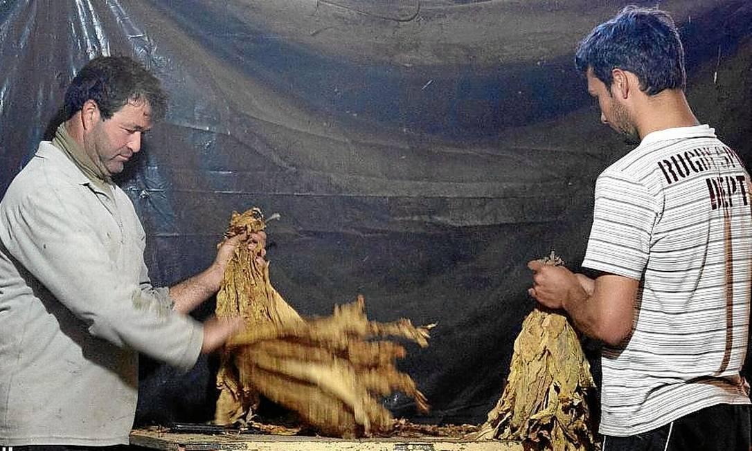 José Eupídio e Igor, que tem 19 anos e trabalha na cultura desde pequeno Foto: / Antonio Scorza