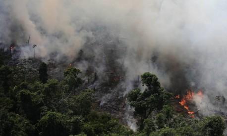 Árvores são queimadas na Amazônia para a atividade agrícola Foto: NACHO DOCE / REUTERS