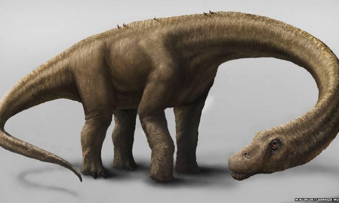 Dreadnoughtus media 26 metros de altura e pesava 60 toneladas Foto: Carnagie Museum