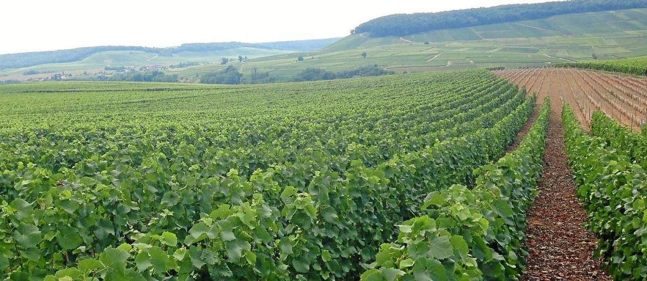 A região de Champagne, na França, está pronta para o que será uma das melhores colheitas de todos os tempos Foto: Vivian Oswald / O Globo
