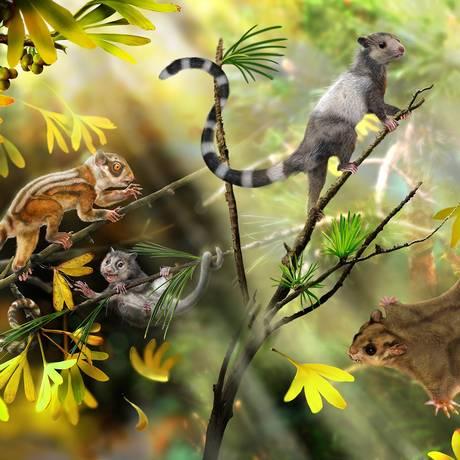 As novas espécies foram descritas a partir de fósseis de 160 milhões de anos encontrados na China Foto: Zhao Chuang/Divulgação