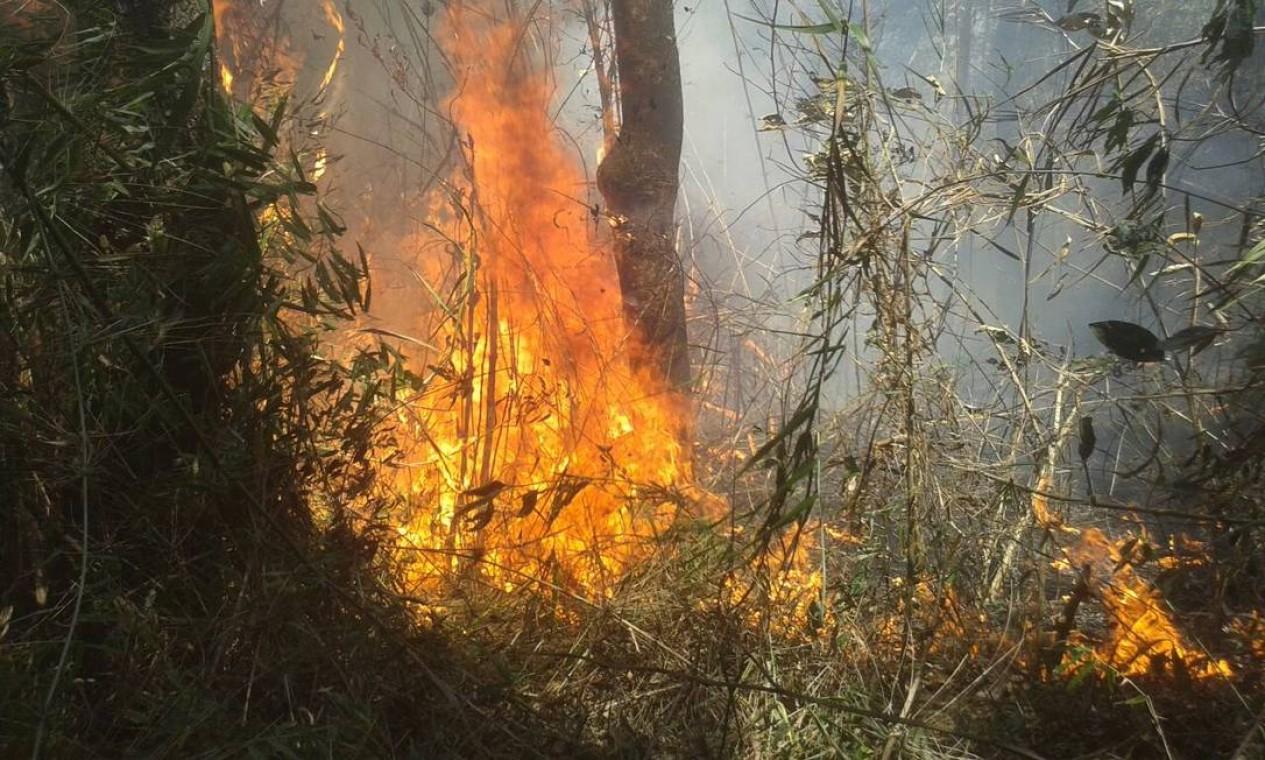 Focos de incêndio chegaram ao parque na segunda-feira Foto: Divulgação