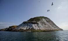 Toda semana, a bióloga Larissa Cunha vai com uma equipe ao Arquipélago das Cagarras para para o trabalho de monitoramento de aves Foto: Agência O Globo / Guilherme Leporace