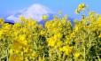 O passeio de trem de Tóquio à Kioto tem o Monte Fuji como cartão postal