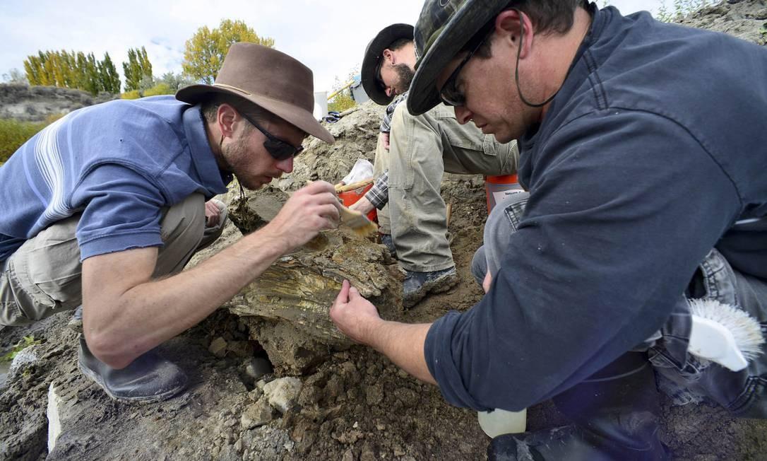 Pesquisadores escavam esqueleto do mamute em Idaho Foto: Dave Walsh / AP