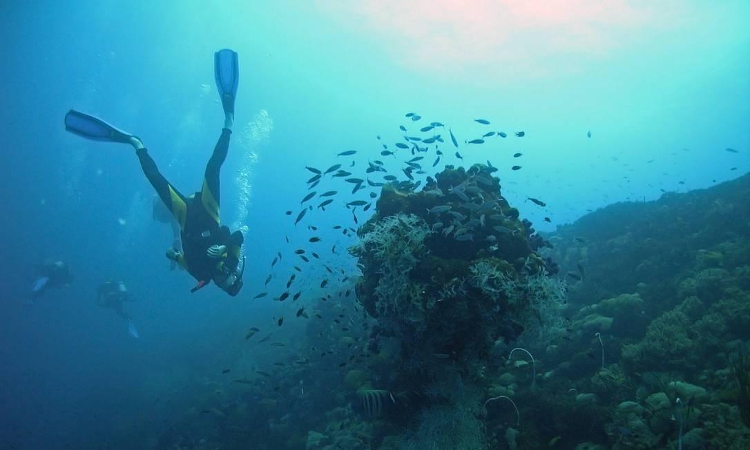 Corais estão entre os ecossistemas mais ameaçados Foto: Free Photos
