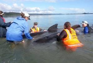 Voluntários trabalham no resgate de cerca de 60 baleias encalhadas na Nova Zelândia Foto: Projeto Jonah