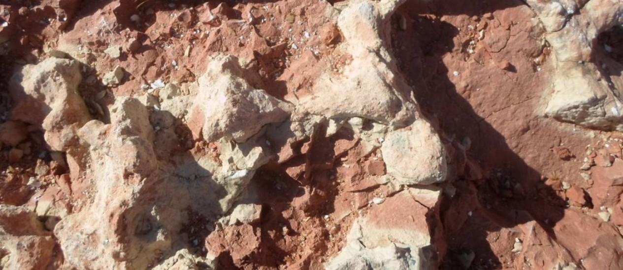 Fóssil de cinodonte encontrado no Rio Grande do Sul Foto: Divulgação/ Cappa/ UFSM