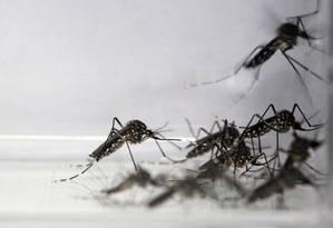 No verão de 2013, vírus tipo 4 foi o mais frequente no país, causando epidemias em diversas regiões Foto: Custódio Coimbra / Agência O Globo