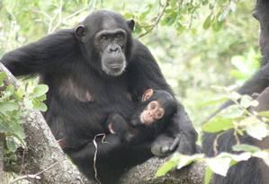 Mães de machos são mais 'liberais', mas depois podem ser agredidas pela própria cria Foto: Mike Wilson
