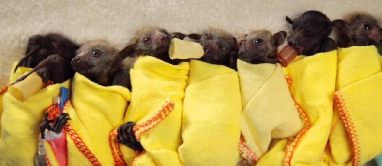 Filhotes tiram cochilos e são alimentados com mamadeiras Foto: Freeimages