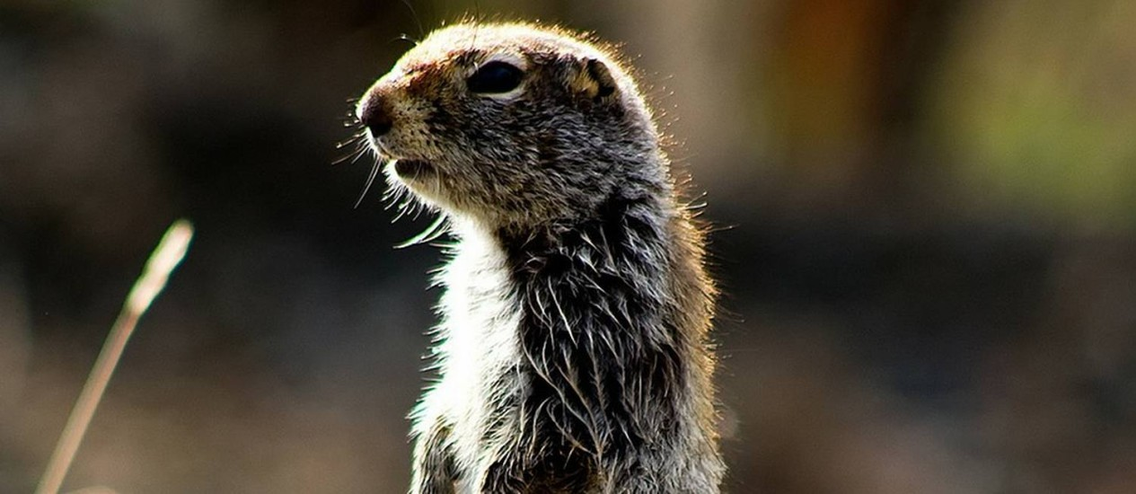 Cientistas afirmam que impacto da vida selvagem na vegetação é subestimado Foto: Reprodução
