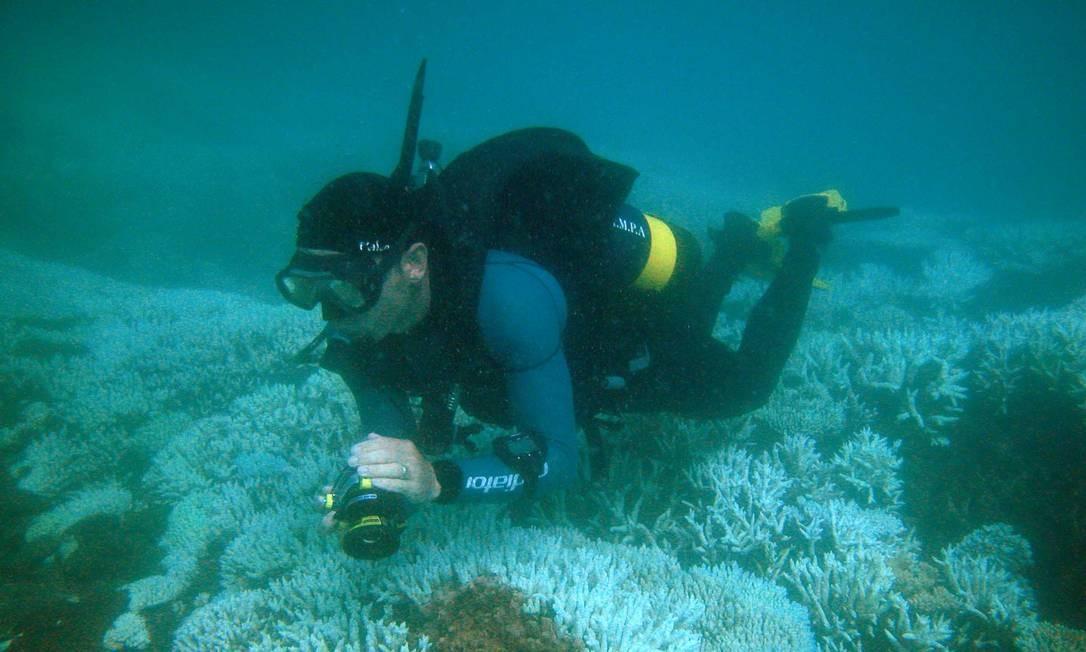 Mergulhador nas Ilhas Marshall, arquipélagos do Pacífico ameaçado de embranquecimento por fenômeno similar ao 'El Niño' Foto: / Reprodução da internet
