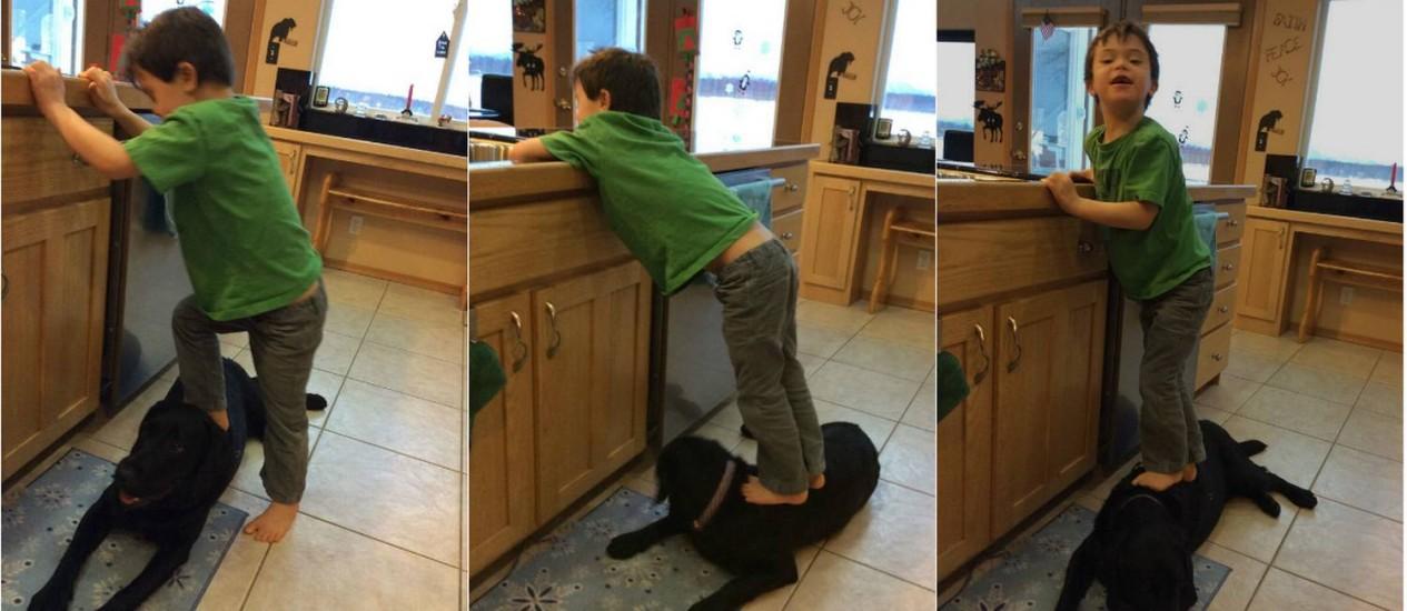 Trig pisa no labrador da família: confusão para Sarah Palin Foto: Montagem / Reprodução de Facebook