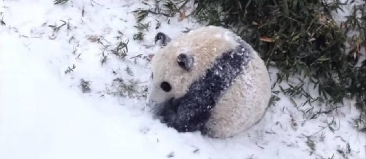Animal se esparramou na neve da colina Foto: Reprodução