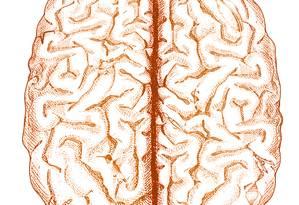 Desenho do cérebro. Foto: Cérebro humano potencializa memória quando há concentração / Editoria de Arte