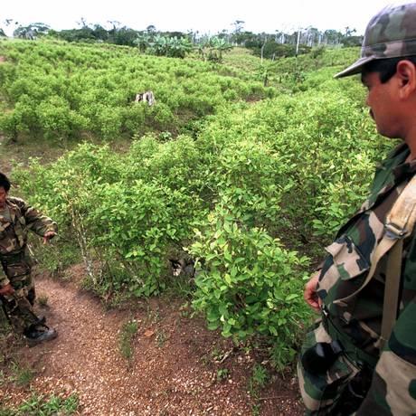 Guerrilheiros da Farc andam em uma plantação de coca Foto: Ricardo Mazalan/AP