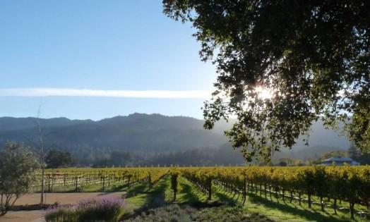 No Norte da Califórnia, o chamado Wine Country reúne algumas das melhores vinícolas dos Estados Unidos, e do mundo, como a Wal Hall, em Napa. Foto: Paulo Motta / O Globo