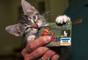 Gatinho morde cartão de associação protetora de animais Foto: Brian Killigrew / Bloomberg News