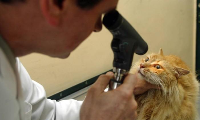 O veterinário oftalmologista Jorge Pereira analisa gatinho Foto: Luciana Paschoal / Agência O Globo