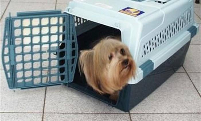 Caixa de transporte de animal Foto: Divulgação