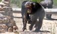 """Imagem do documentário """"O homem que murmurava ao ouvido dos chimpanzés"""""""