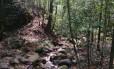 Floresta possui quase 4 mil hectares de área