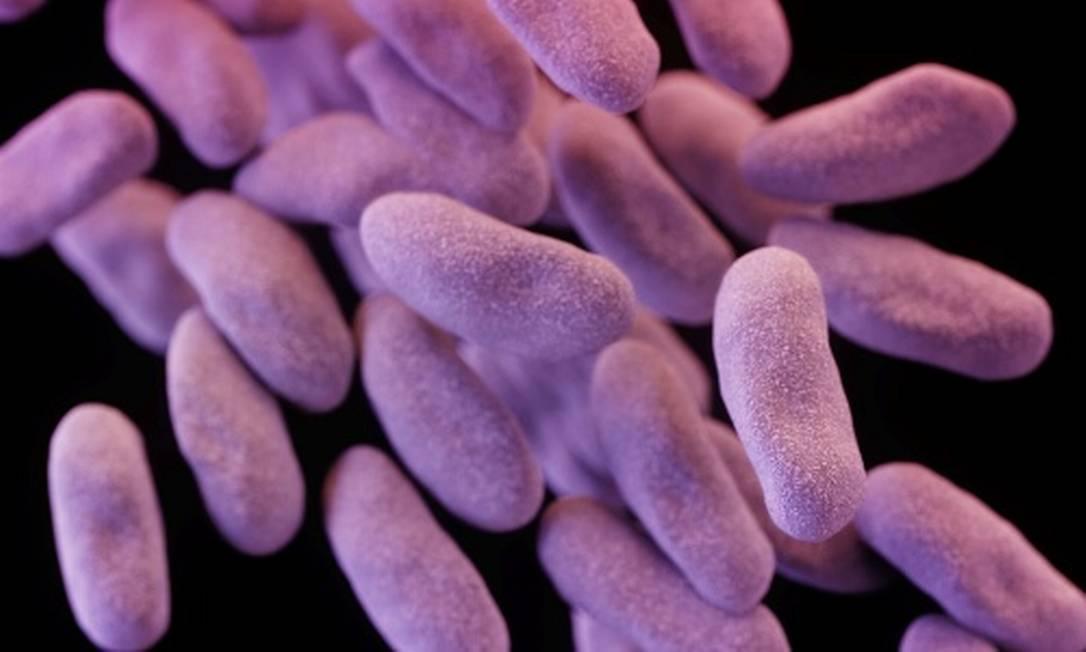 A superbacteria Carbapenem-resistant enterobacteriaceae (CRE) matou duas pessoas na Califórnia na última semana Foto: / Divulgação/CDC