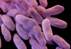 A superbacteria Carbapenem-resistant enterobacteriaceae (CRE) matou duas pessoas na Califórnia na última semana Foto: Divulgação/CDC
