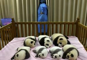 Pandas num berçário de Chengdu, na província de Sichuan, sudoeste da China, em 2002 Foto: AP