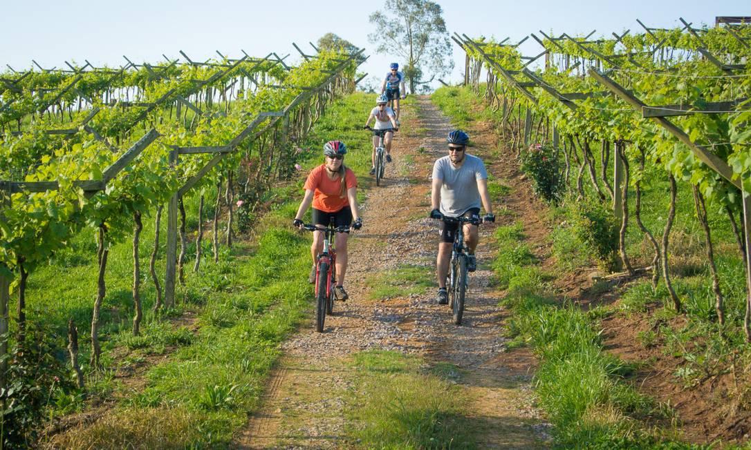 Passeio de bicicleta pelas vinícolas da Serra Gaúcha é um dos novos programas turísticos desenvolvidos para a região Foto: Divulgação / Jonatha Jünge