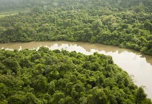 Vegetação preservada em São Félix do Xingu Foto: Haroldo Palo Jr.