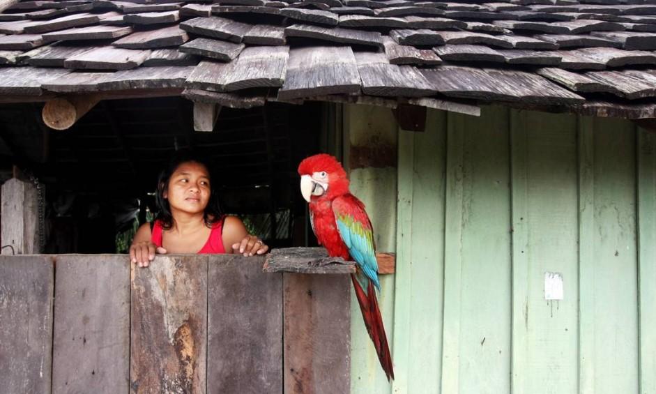 Na reserva Terra Indígena Alto Rio Guamá, no nordeste do estado do Pará, índia Iritan Tembém, de 30 anos, observa a arara de estimação na janela de sua casa Foto: Márcia Foletto / Agência O Globo