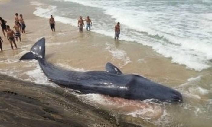 Baleia morre após encalhar em praia na Ilha Grande Foto: Inea / Divulgação