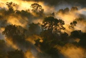 Alerta na floresta. Ampla pesquisa indica que taxas de mortalidade de árvores da floresta amazônica aumentaram em mais de um terço desde a década de 1980 Foto: Peter van der Sleen / Divulgação