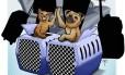 Companhia aérea proíbe check-in de animais de estimação