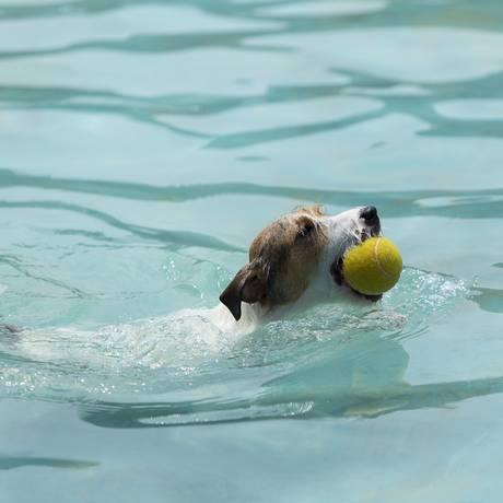 Cão se esbalda em piscina do Park Clube do Totó Foto: Leo Martins / Agência O Globo