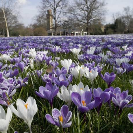 Um dos cenários no Jardim Botânico Real, em Londres, o Kew Gardens Foto: RBG Kew / Divulgação