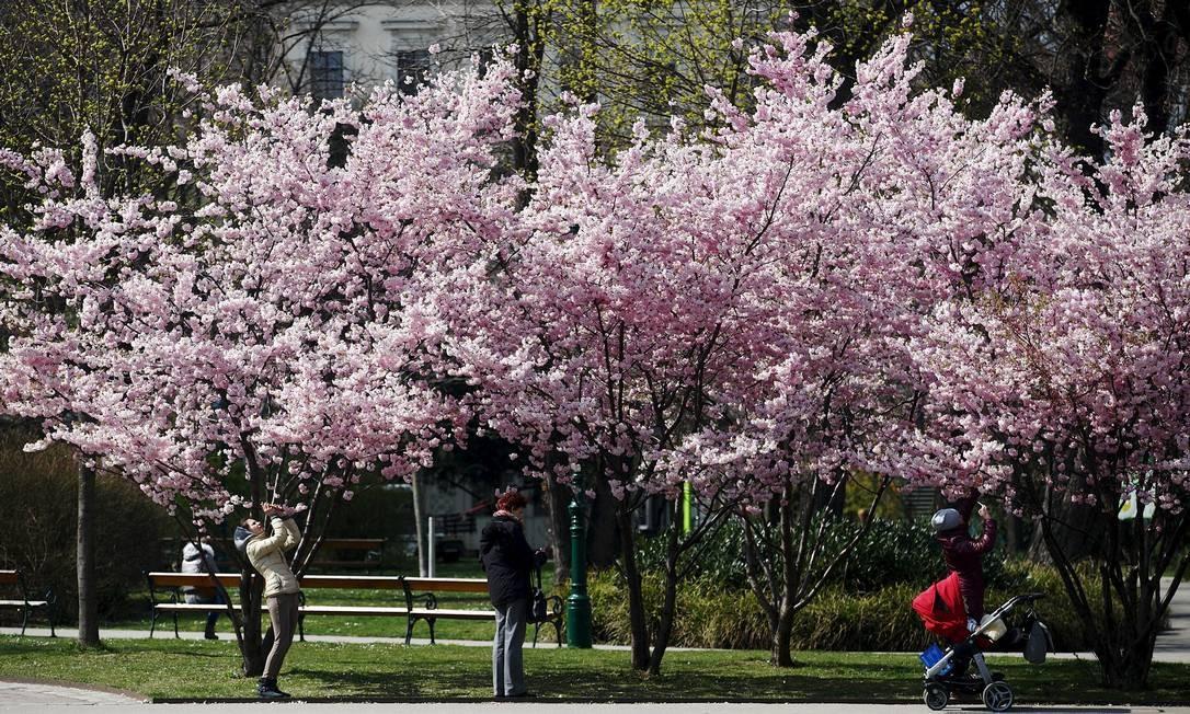 Em Viena, capital da Áustria, as flores cor-de-rosa clarinho também fazem grande sucesso entre moradores e visitantes. Foto: HEINZ-PETER BADER / REUTERS