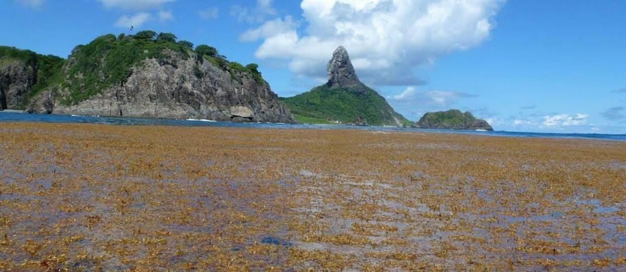 Concentração de algas chegava ao tamanho de um campo de futebol Foto: Leonardo Veras