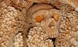 DNA foi retirado de esqueleto encontrado em caverna